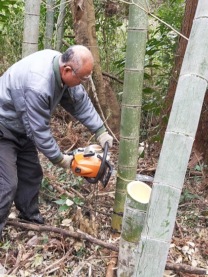 cutting a bamboo with a chain saw