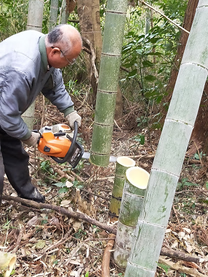 cutting a bamboo with a chain saw2